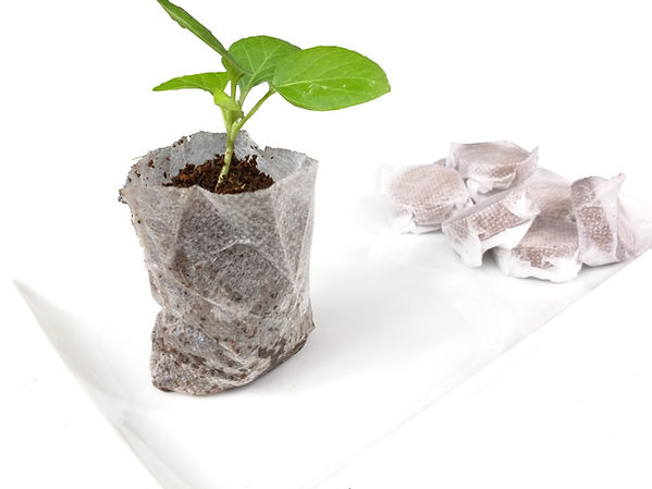 hydrated coconut coir grow disk with plant