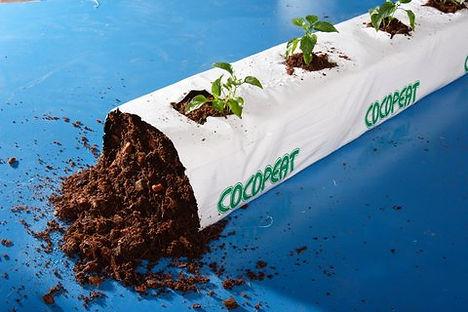 coconut coir grow bag with plants