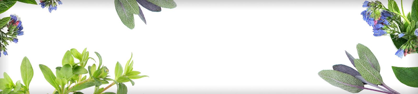 API_banner.jpg