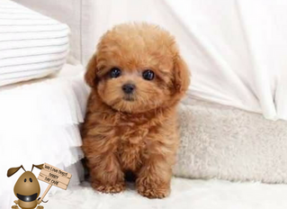 When should I socialise my puppy?