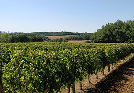 Cottages de Garrigue Dordogne walking holidays vineyards