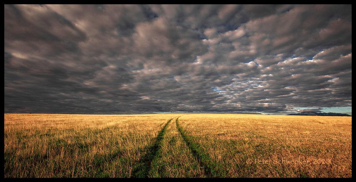 prairie raod 5-27-2020 HL7A7561 50x25 FB