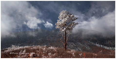 lone frosted tree and clouds 2-12 HL7A38