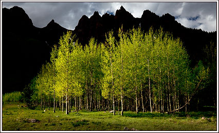 spring aspen at maroon bells for card.jp