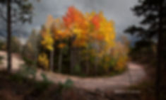 island of fall color copy.jpg