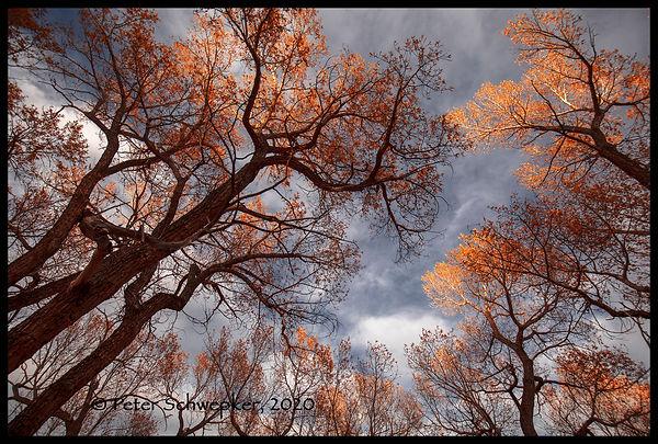 FALL TREES 10-24-2020 HL7A9187 FB Copy.j