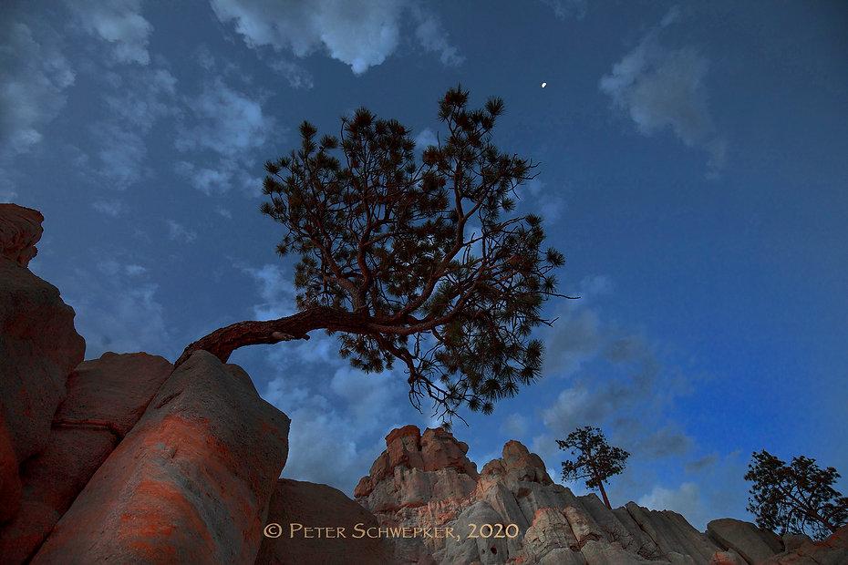 pulpit at dusk HL7A9603 FB copy.jpg