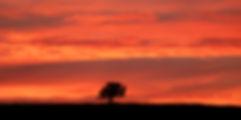SUNSET PANO 3-12-2020 70X35 COPY.jpg