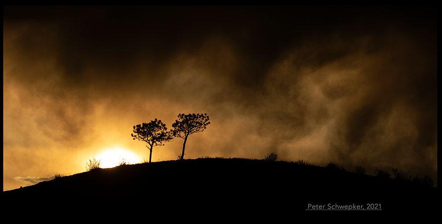 SUNSET AND TWO TREES RAW 50x25mmformonin