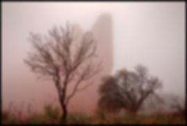 garden fog HL7A2579 copy.jpg