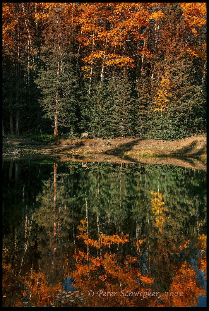 deer at pond HL7A6855. FB COPY.jpg