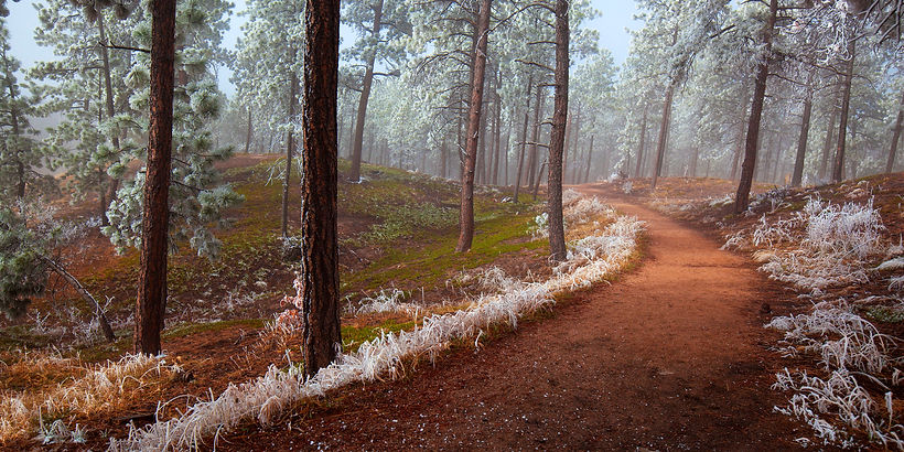 frosted path april 2018 4603 50x25.jpg