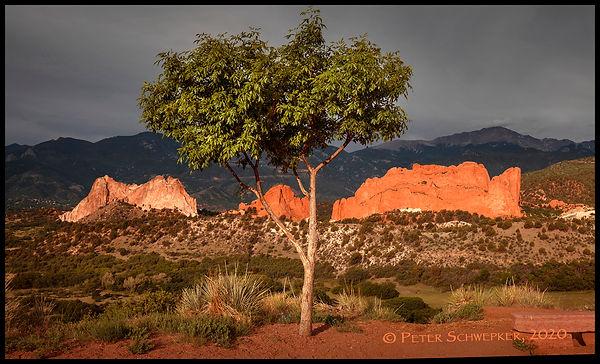 garden sunrise pano 6-7-2020 50x30b FB 2