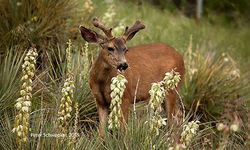 deer eating 2019 6106 50x30 copy.jpg