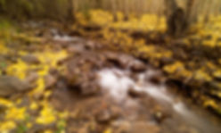 stream and golden leaves, st elmo 2019 2