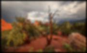 garden through tree 7-3-2020 pano 50x30