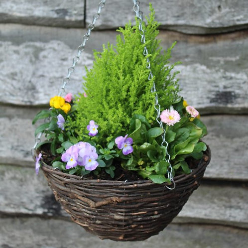Spring Planted Hanging Basket