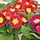Thumbnail: 10cm Spring Bedding Plant Bundle