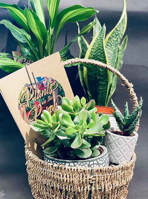 Indoor Plant Bundle