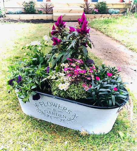Galvanised Seasonal Planter