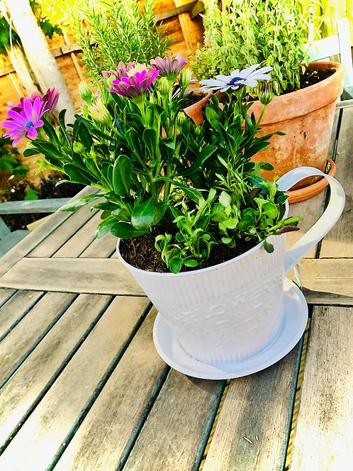 Seasonal Large Teacup Pot - White