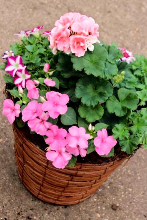 Seasonal Round Planter