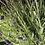 Thumbnail: Lavender Selection