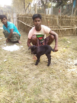 bangla-goatshed4