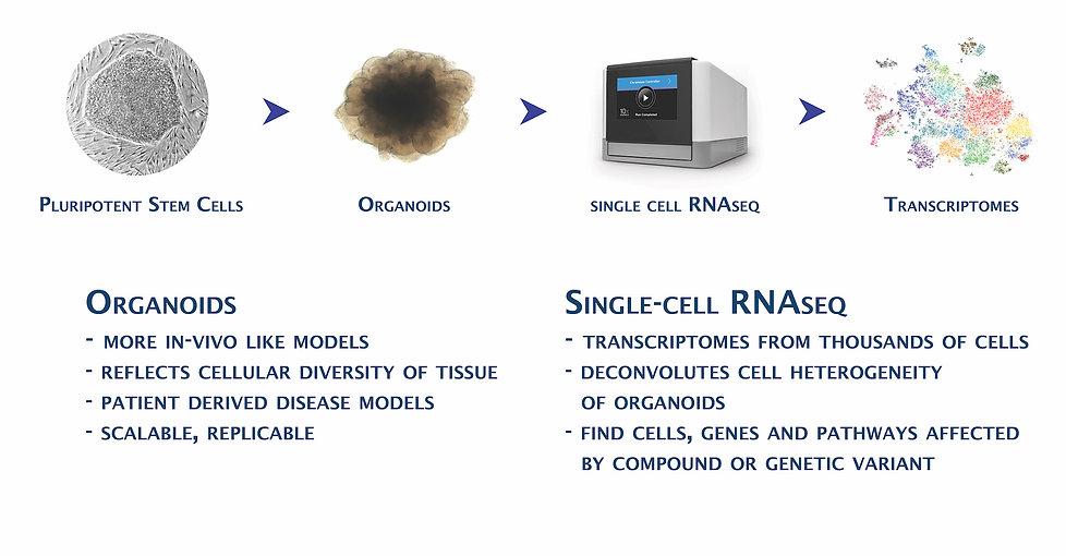 single cell focus.jpg