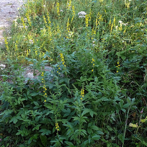 Agrimony 1 Oz. Package
