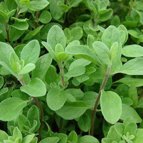 Marjoram Leaf 2 oz. Package