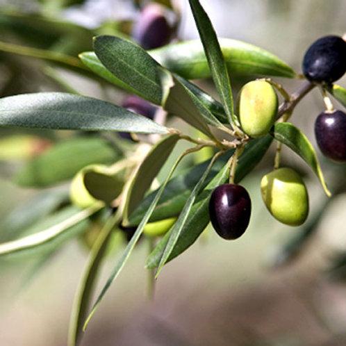 Olive Leaves 1 Oz. Package
