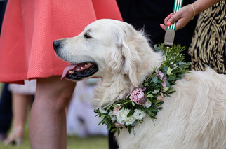 Dog collar of roses, eustoma at foliage at Stoke Place
