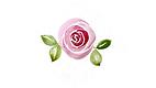 pink rose thumbnail.png