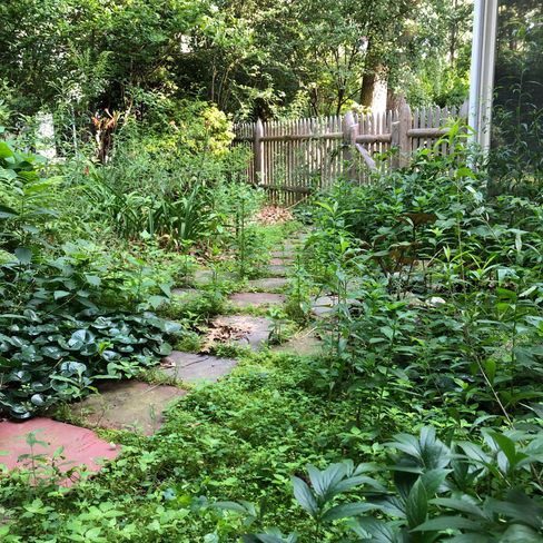 Neglected Garden with potential