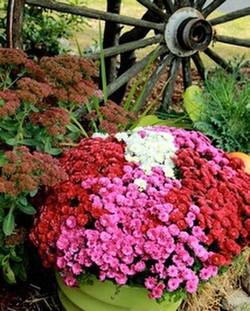 Happy Fall! 🍁🍂🌻#fallinspired #mums #SIMPLYDONE 617.962