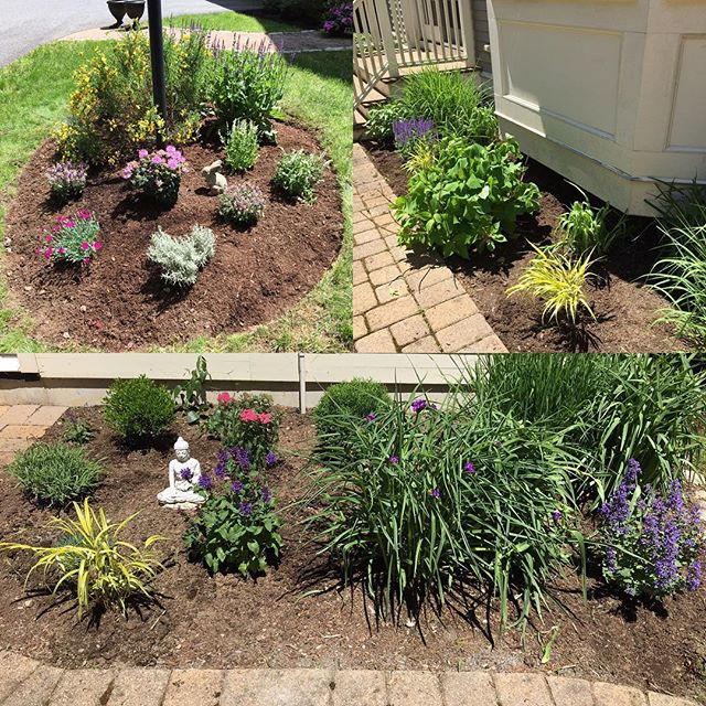 Perennial plantings, splitting, & relocating made a huge impact on this clients landscape.