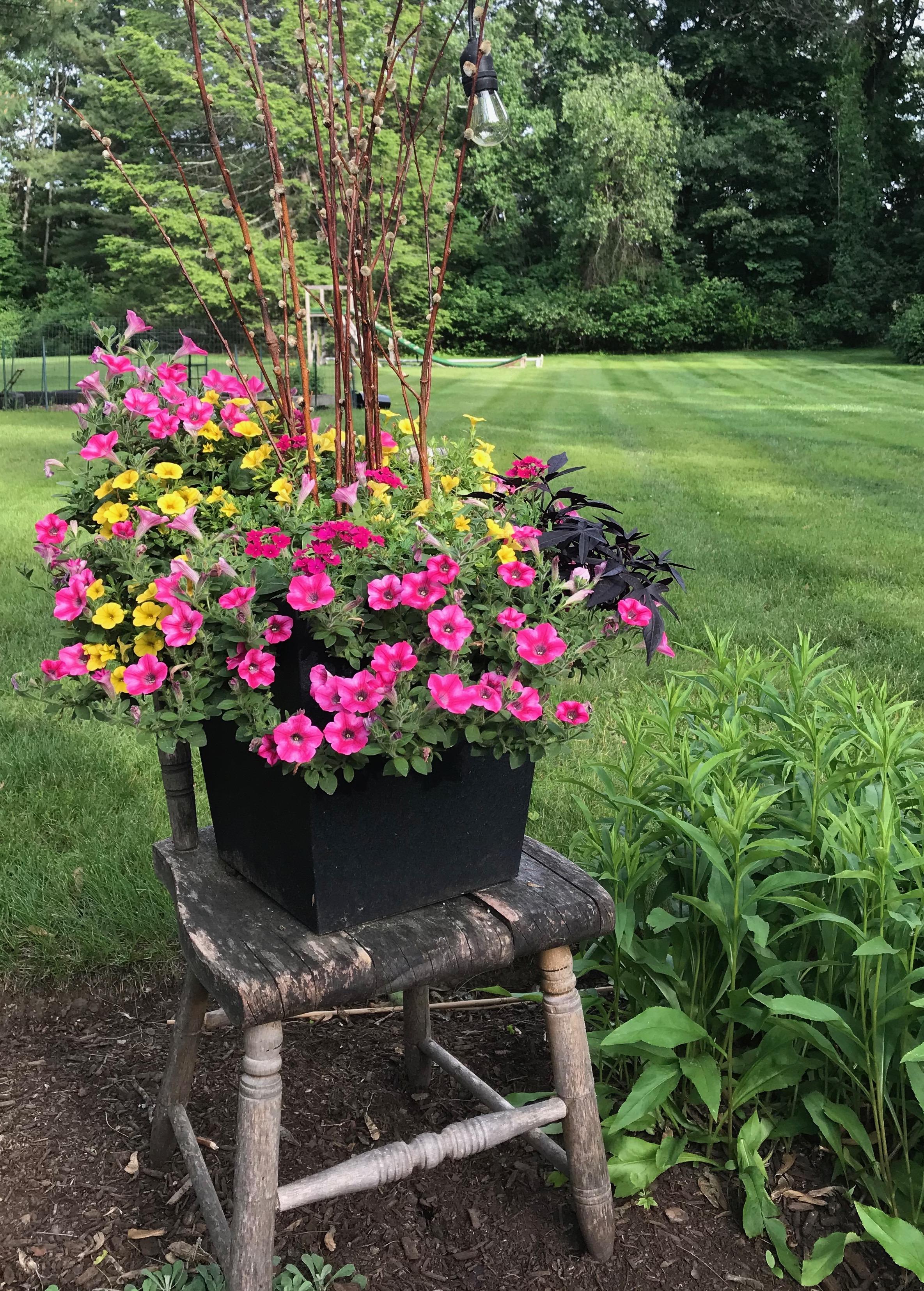 creative spring planter