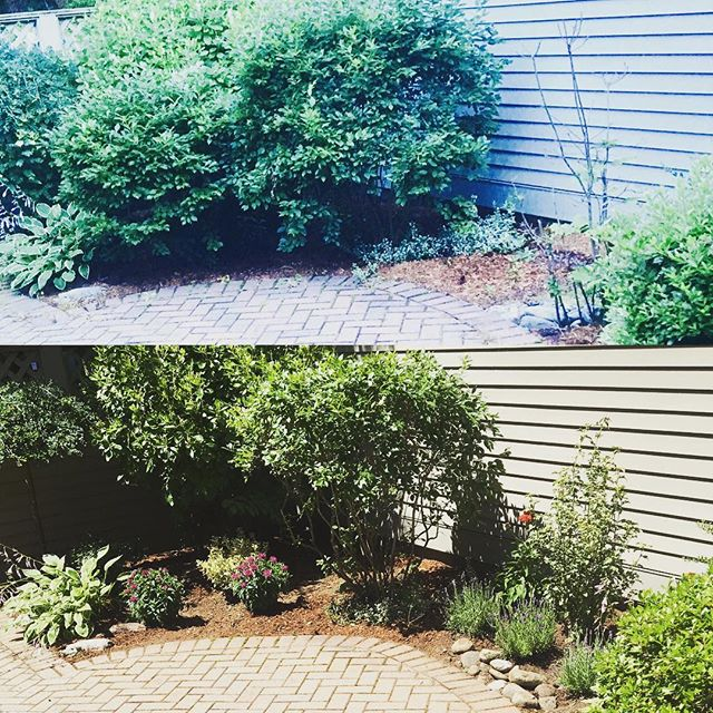 different times of day... removed a large shrub to open up space, lots of pruning,new materi