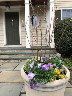 Spring Pansy Container