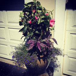 Gorgeous planters with pinks