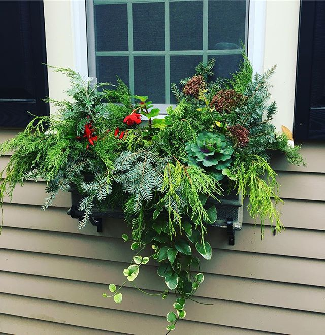 ❤️ using greens in Window box designs..