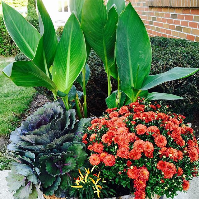 Post office containers ✅ beautification by Cindi & Linda Wayland garden club