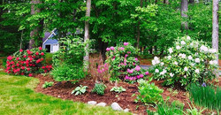 large shrubs serve for great privacy