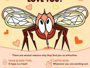 E -   Mosquitos