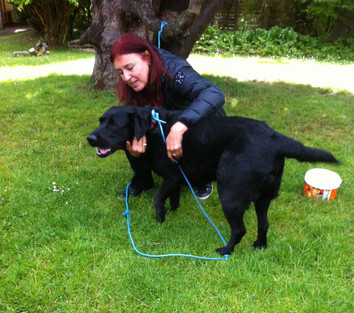 Dog in Scottland