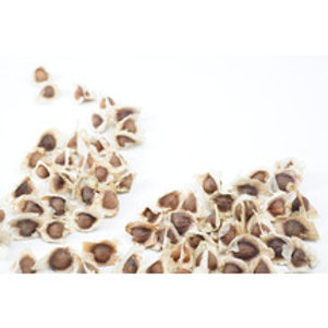 Moringa Seeds    25 pcs.