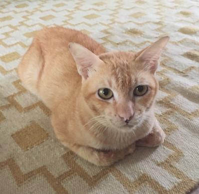 Gino the shy Ginger