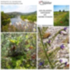 carte-we-plante-domaine-le-chapelier-concept2comm