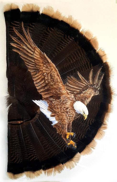 Bald Eagle-full fan.jpg